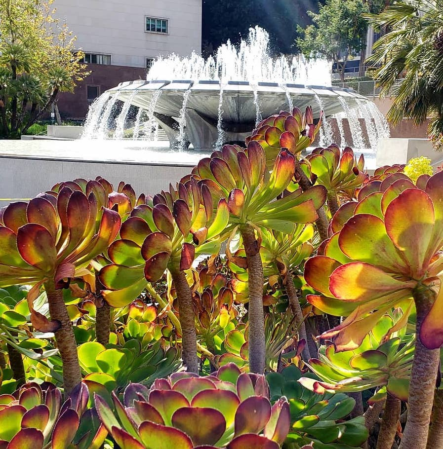 Grand Park fountain succulents